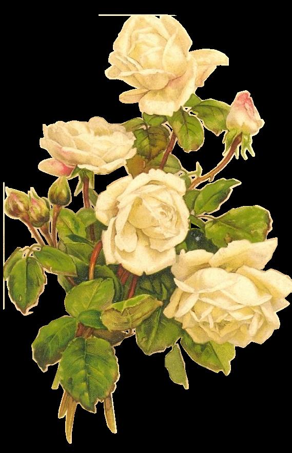 Blackwidow12fileswordpress 2014 02 Yellow Roses Bumblebee