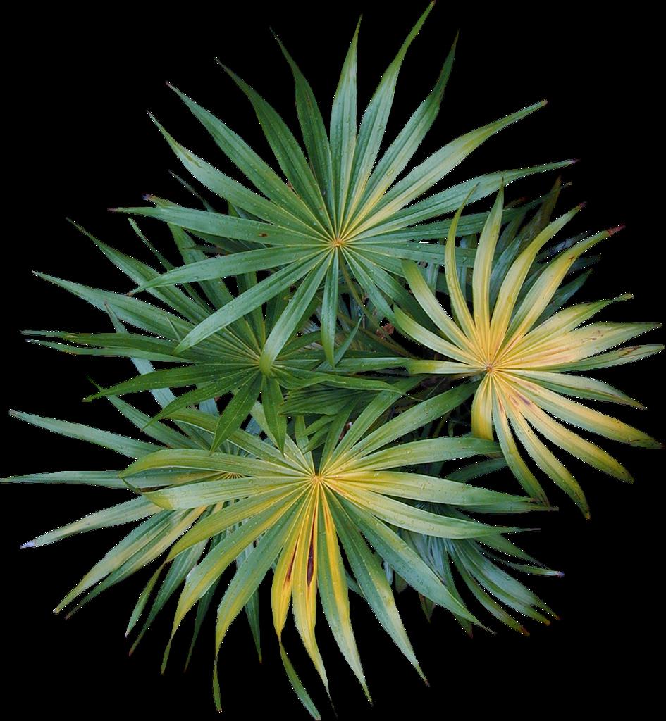 пальма вид сверху картинка нему подают разнообразные