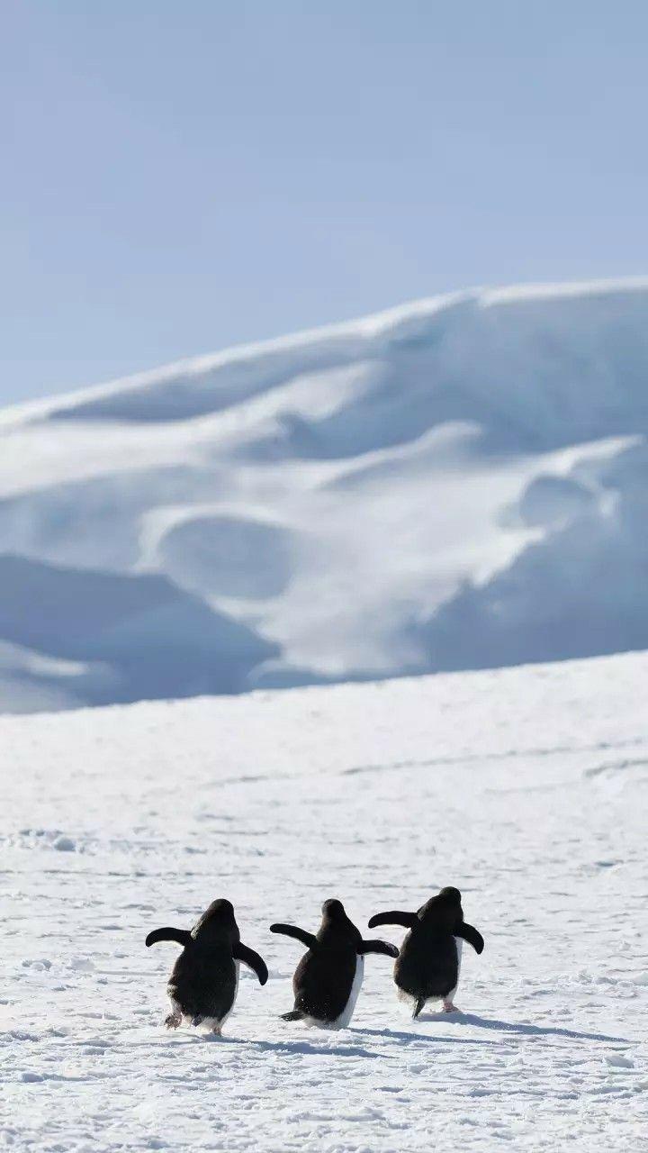 Iphone Wallpaper ペンギン かわいい かわいいペット 可愛すぎる動物