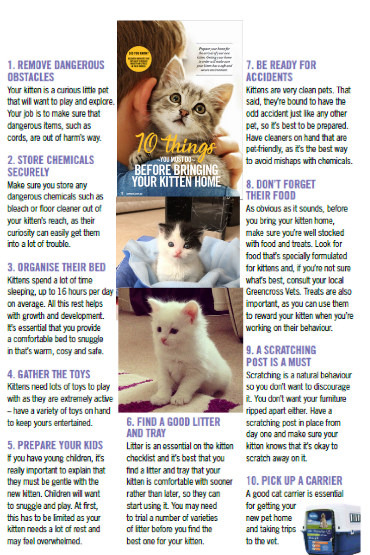 10 Things You Need To Know Before Bringing A Kitten To Your House Your Pet Pets Cats