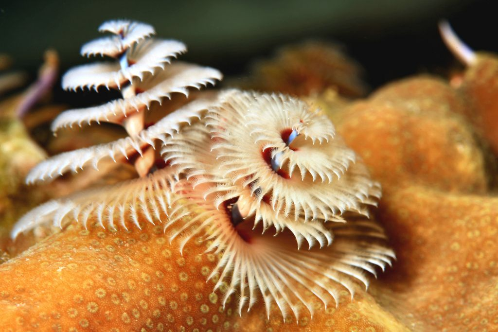 Have A Holly Jolly Christmas Tree Worm Unusual Animals Unique Christmas Trees Underwater Creatures