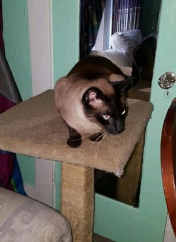 Check Out Jackie Chan S Profile On Allpaws Com And Help Him Get Adopted Jackie Chan Is An Adorable Cat That Needs A New Home Http Cat Adoption Cats Cute Cats