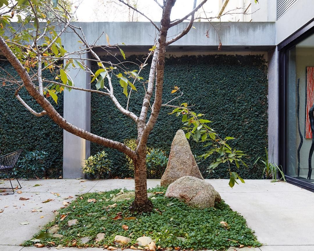 A Single Cherry Tree In The Centre Of The Courtyard At Ross Street Residence In Toorak By B E Architecture Architecture Tree Landscape