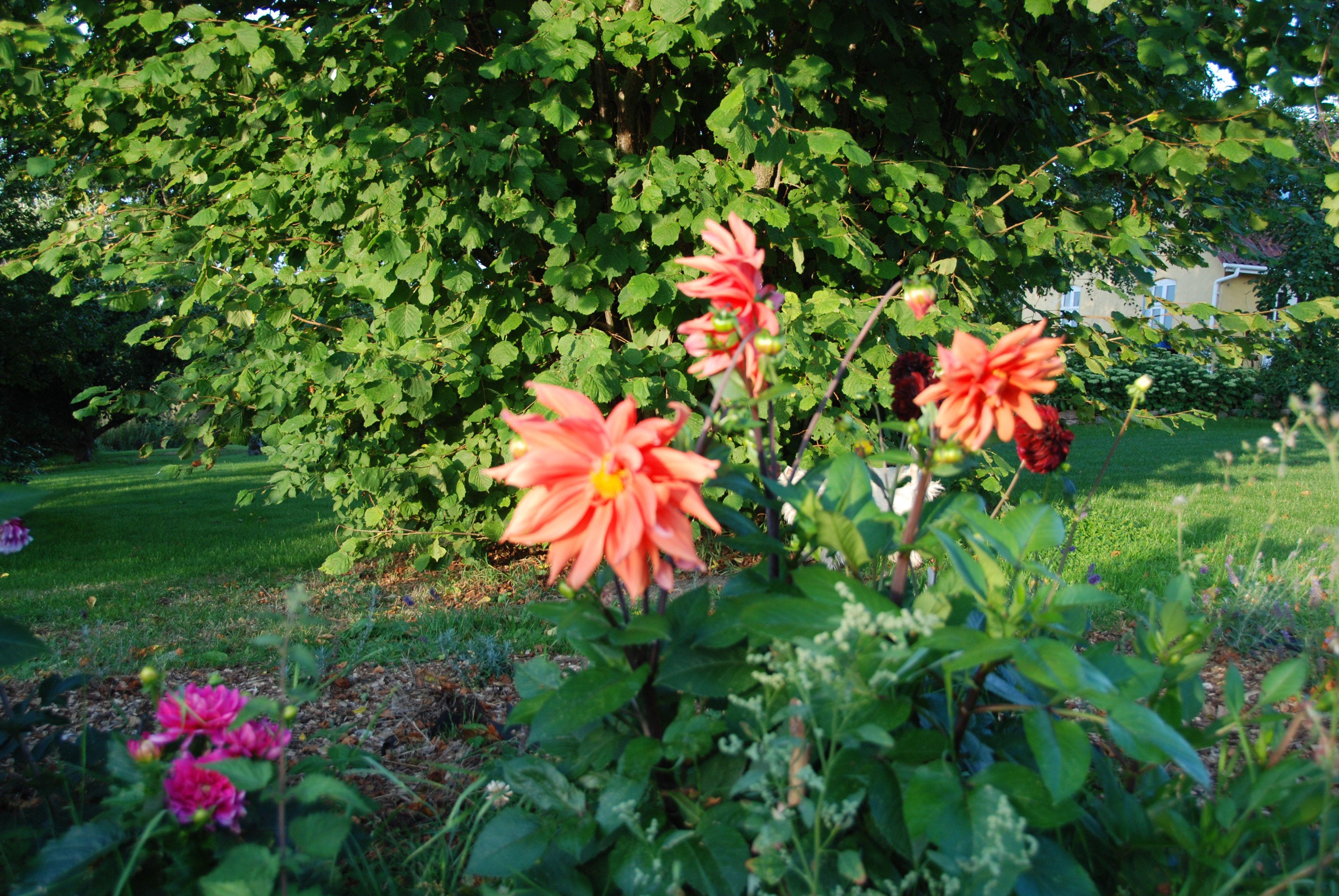 Blomster fra haven på Valdemargaard