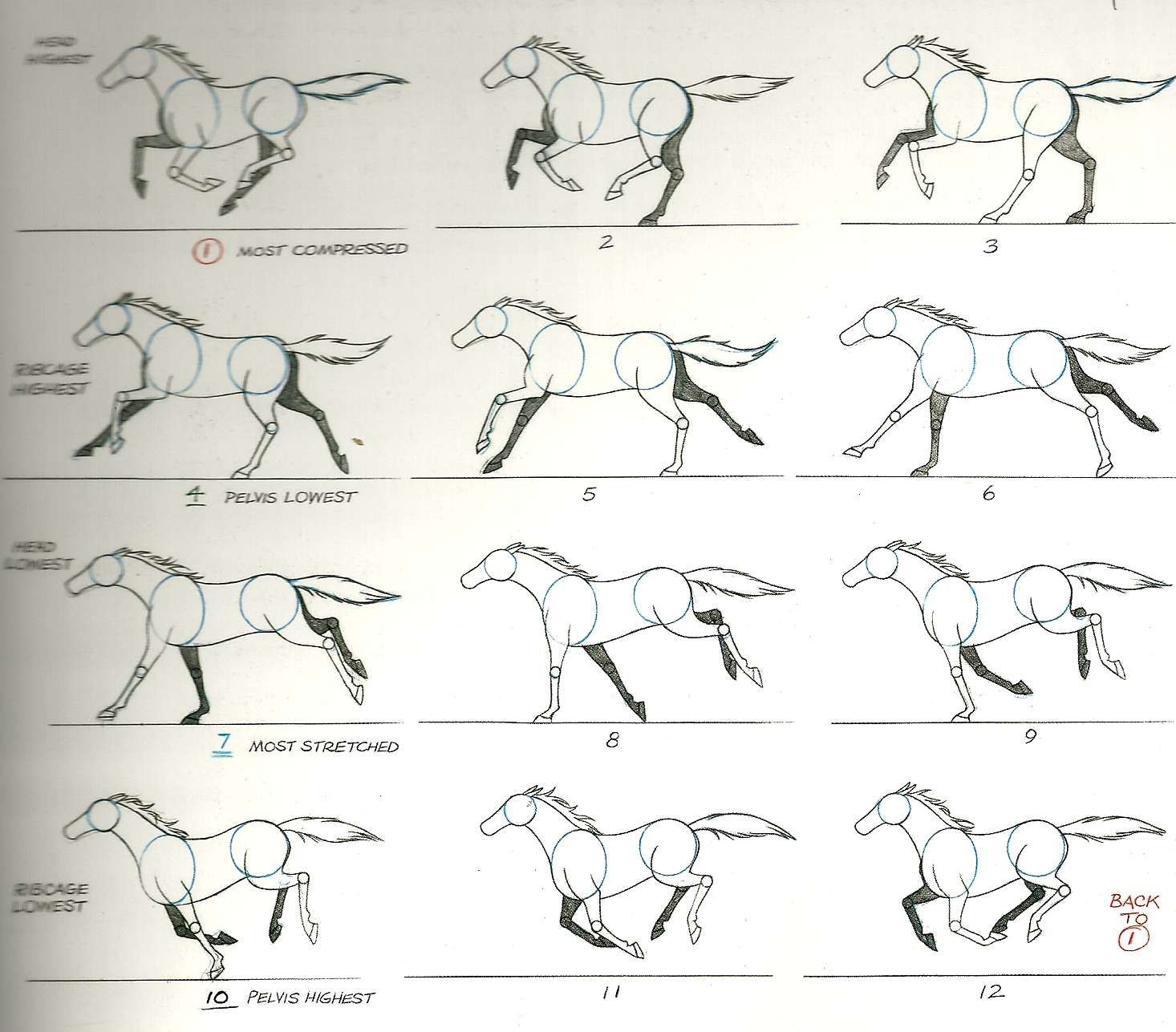 Quadruped Run Cycle Horse Animation Horse Drawings Horse Running Drawing