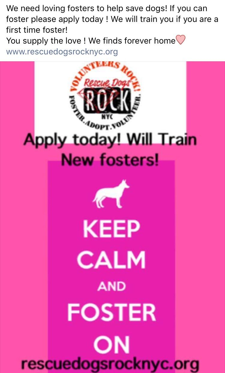 Fostering Save Lives Http Rescuedogsrocknyc Org Saving