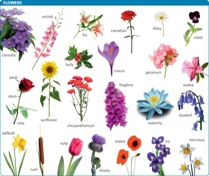 Flowers Vocabulary | Vocabulary, Flower names, Flower art