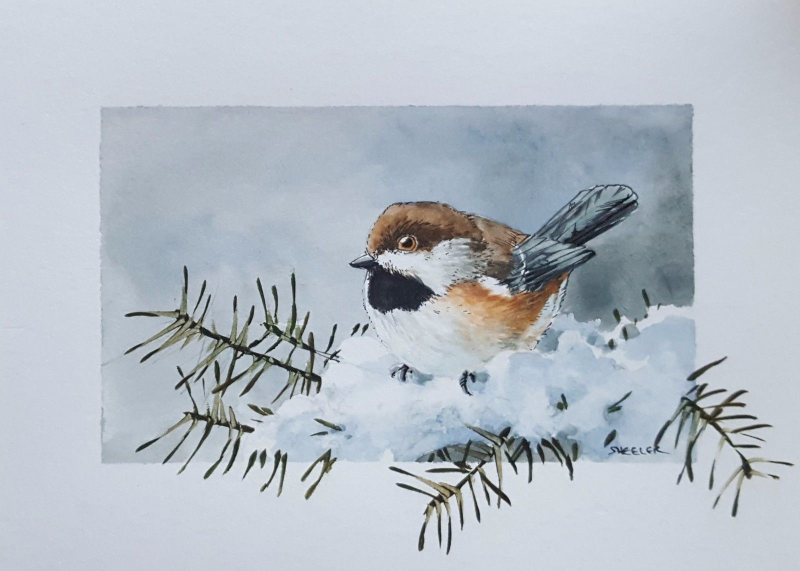 Boreal Chickadee By Peter Sheeler Fine Art Original Watercolor