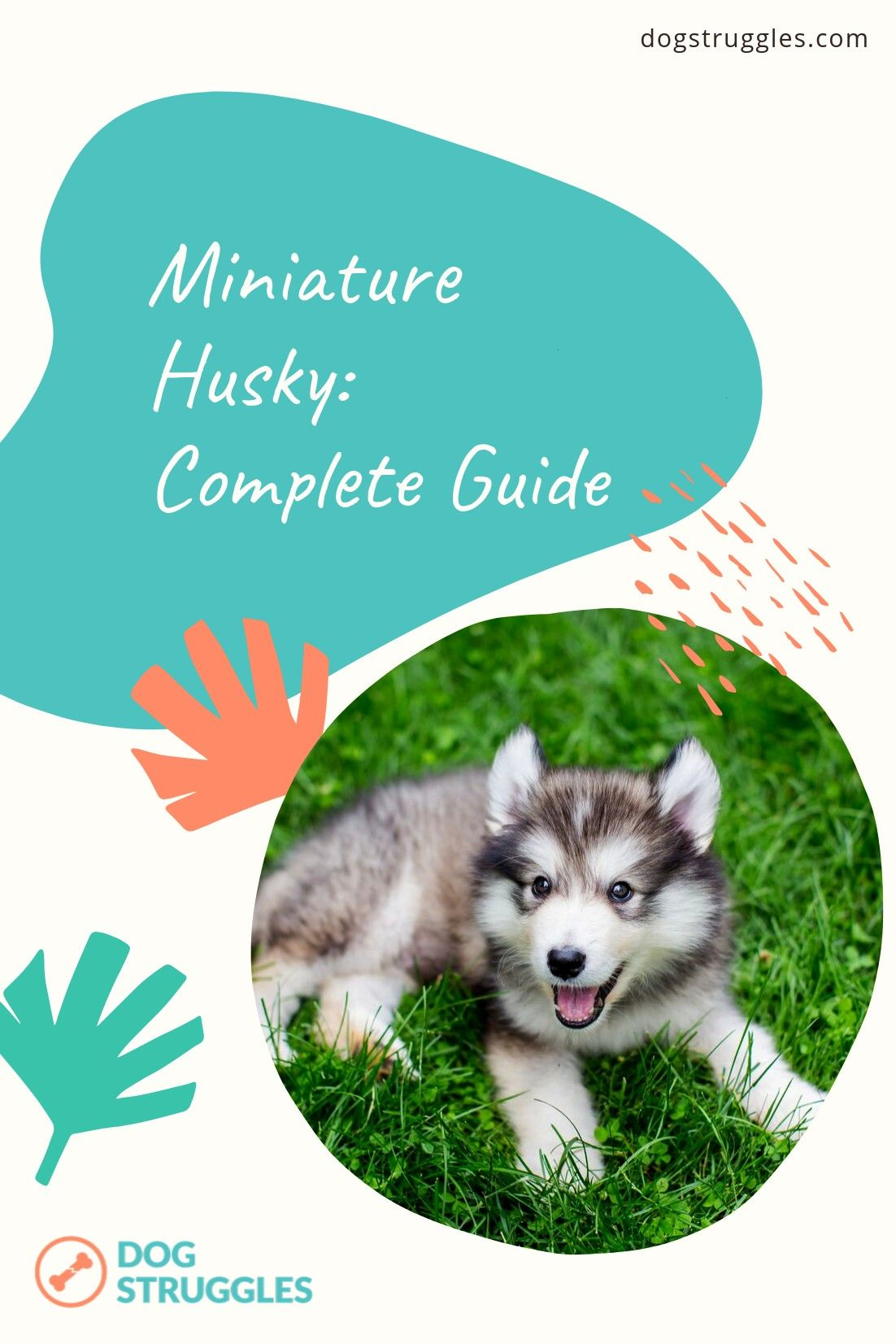 Husky Complete Guide Cute quirky and with 100 canine characteristics nothing lap dogish about this breed the miniature Husky is a small package with a big personality Ind...