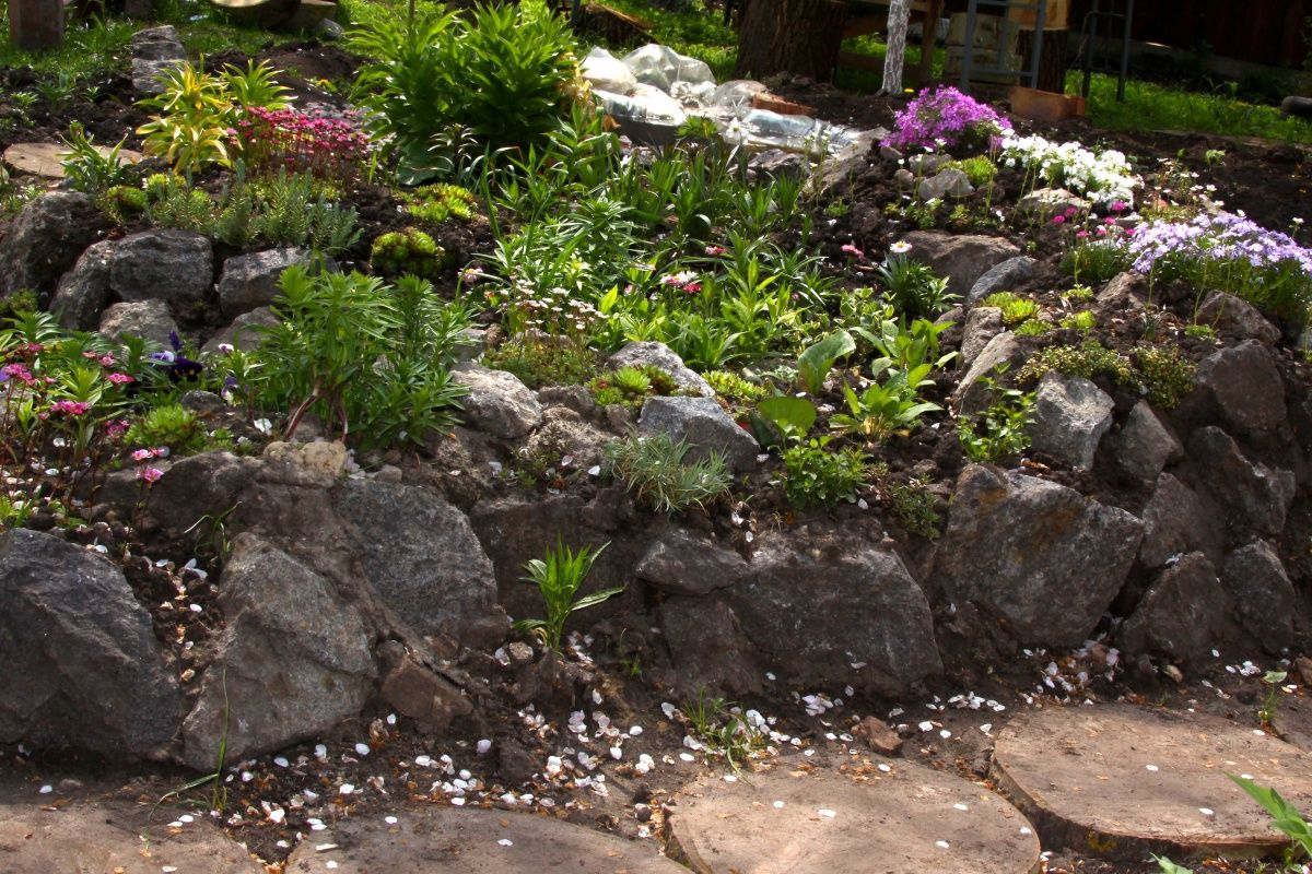 Landscaping With Rocks Plants Landscaping Alpine Hill