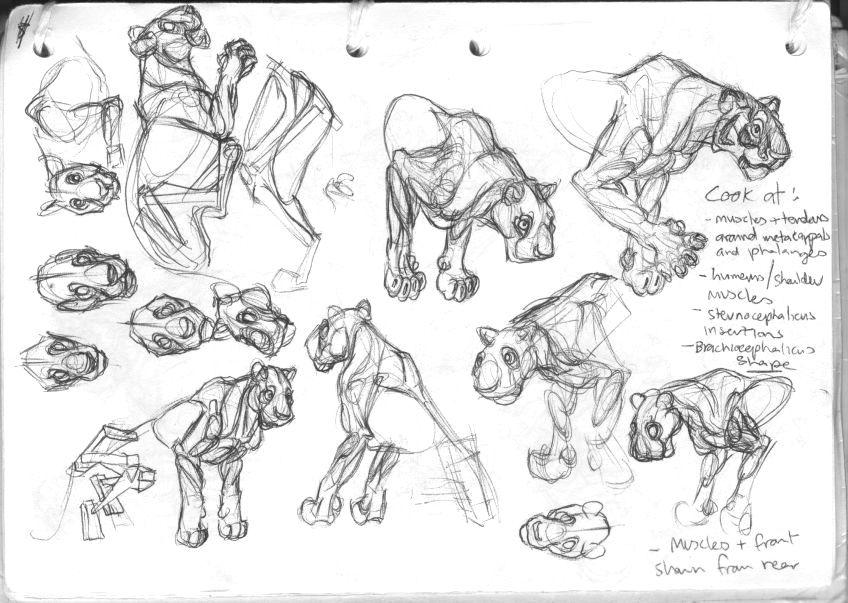 tiger skeleton anatomy - Google Search | Sketchbook | Pinterest ...