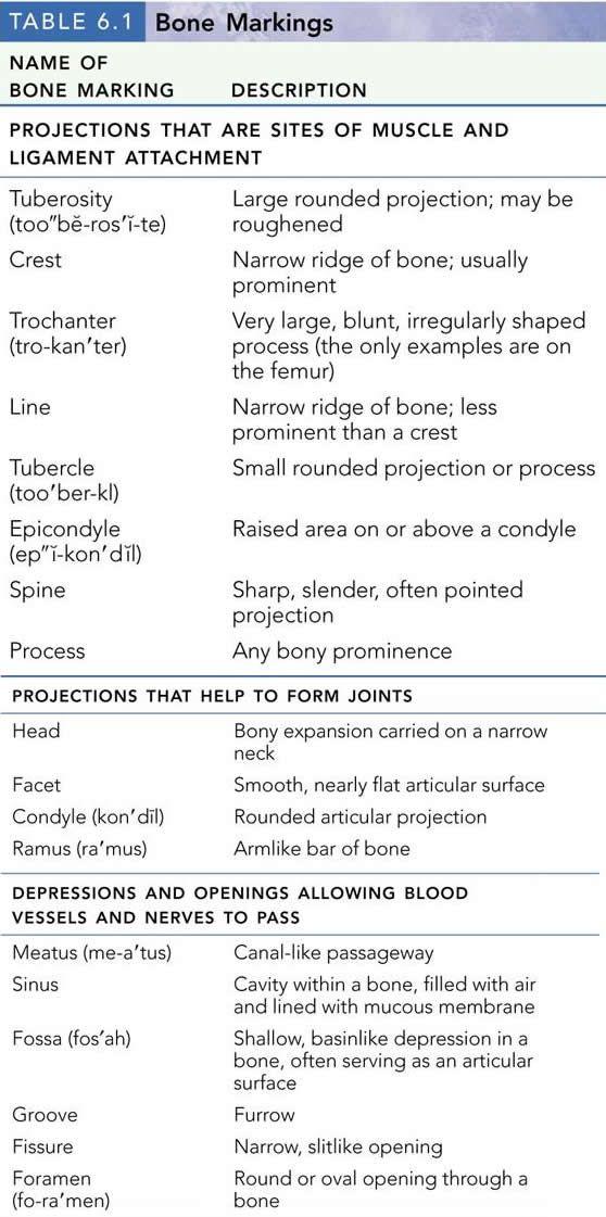 Good condensed info on bone growth | Anatomy | Pinterest