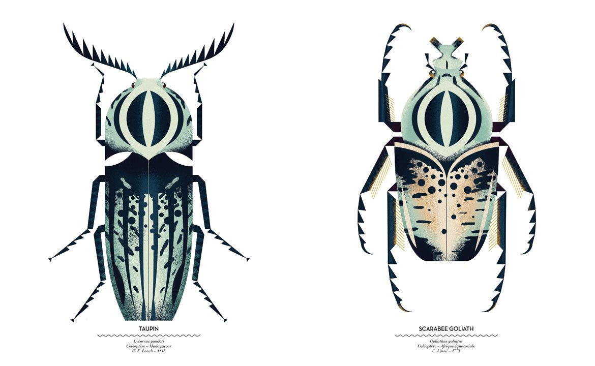#Insects #bugs #animal #illustration