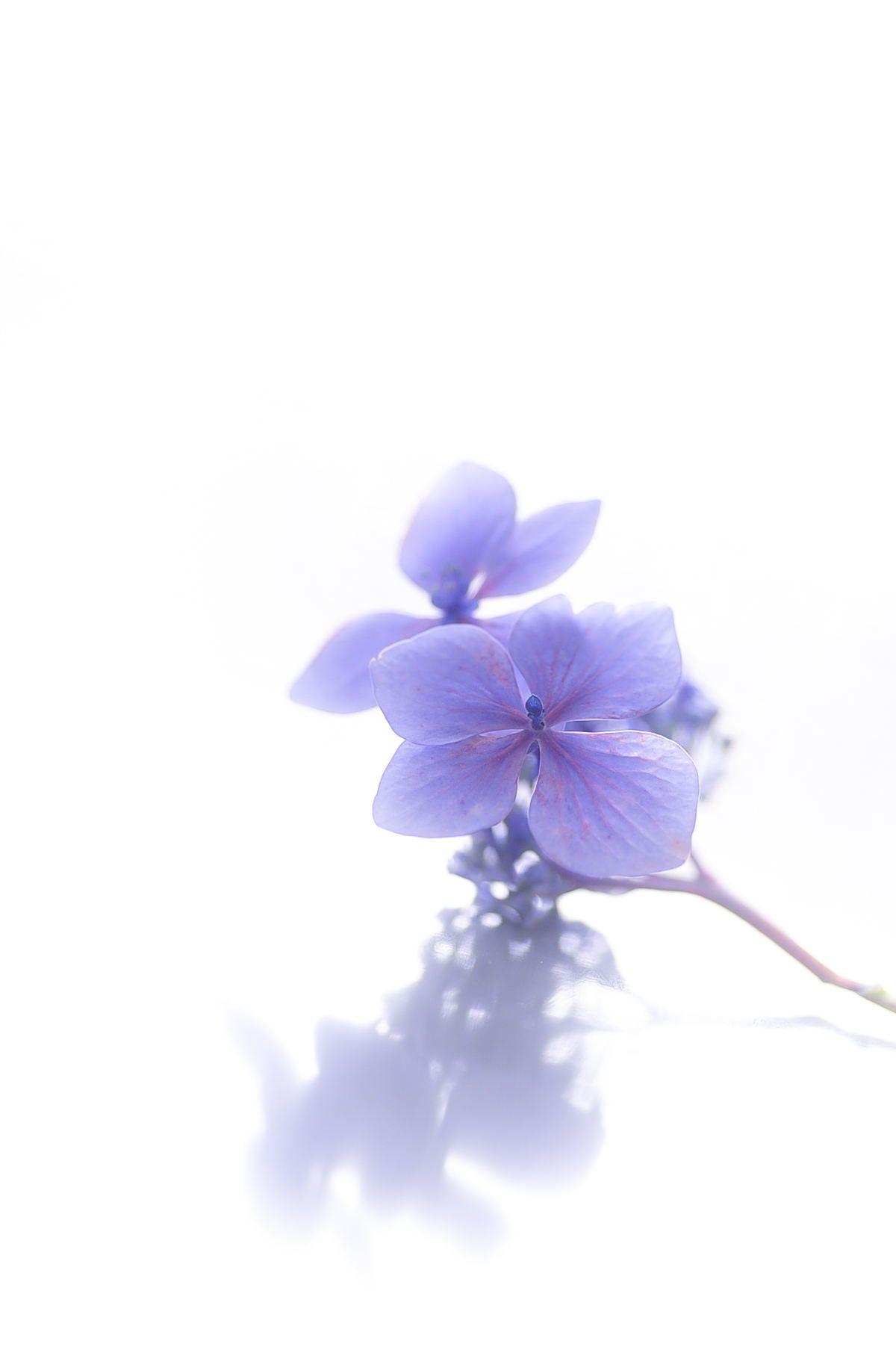 White And Violet Lavender Aesthetic Purple Wallpaper Iphone Purple Art