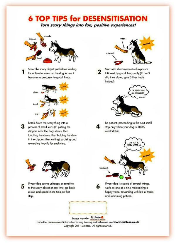 Training Tip Is Your Cat Dog Rabbit Reptile Or Bird Fearful