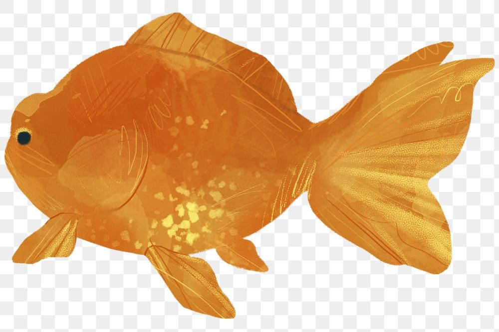 Watercolor Goldfish Painting Transparent Png Free Image By Rawpixel Com Nunny Dog Watercolor Painting Golden Retriever Drawing Watercolor Dog
