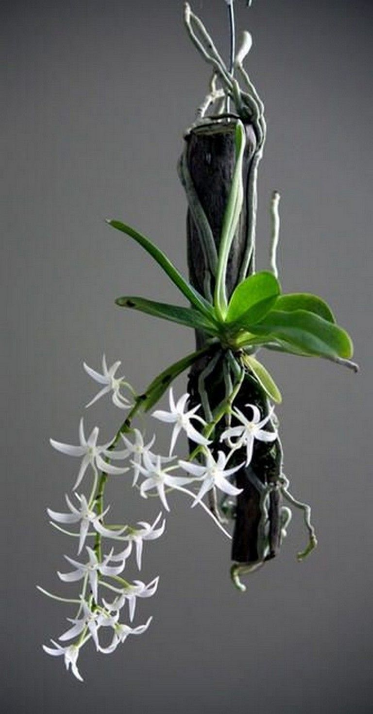 Exciting Diy Hanging Orchids Ideas In 2020 Hanging Orchid Orchids Orchid Care