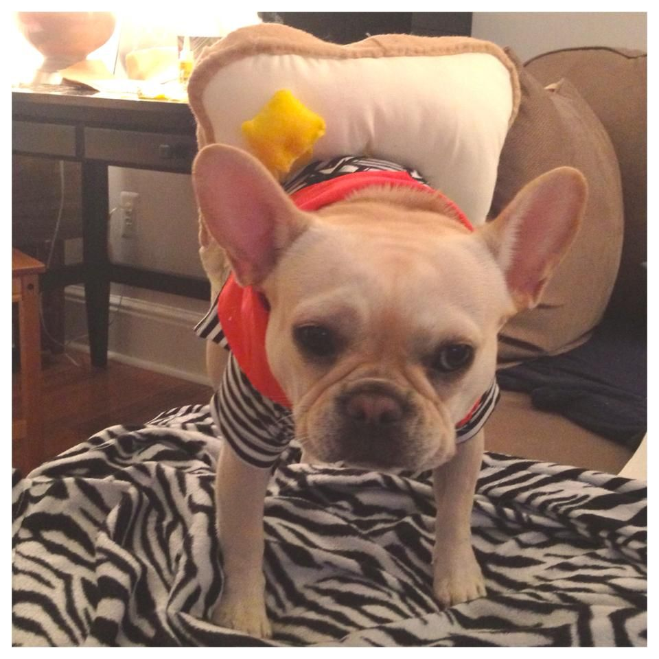 Laverne's Halloween costume, year 2. Frenchie Toast! french ...