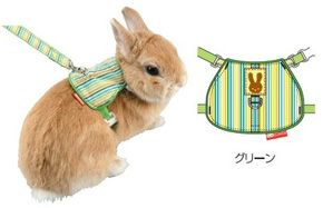 Correa Para Conejos Enanos Buscar Con Google Conejos