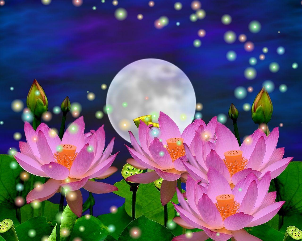 - Nature flower hd wallpaper download ...