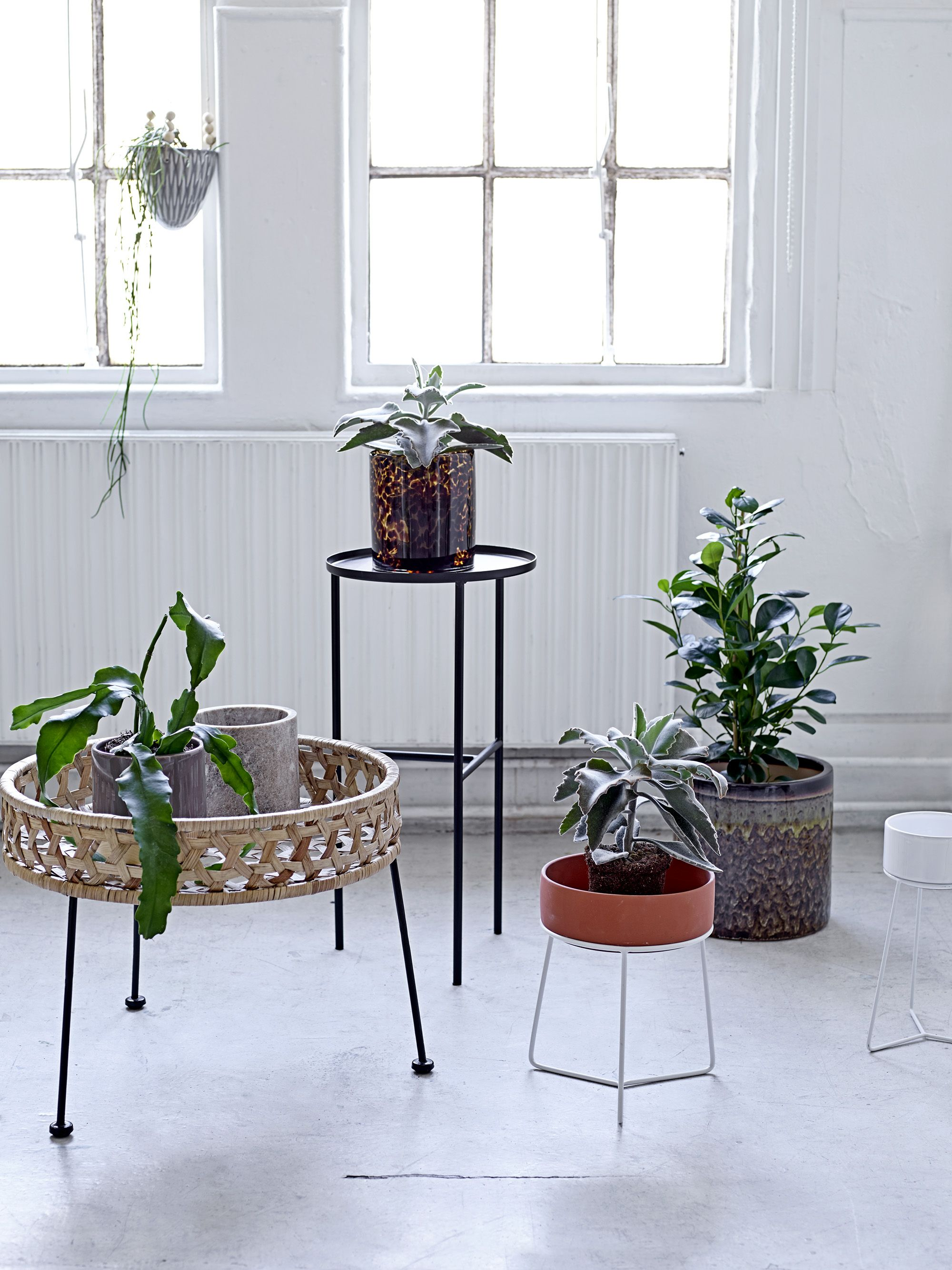 Retailers - Find stores and webshops | Pinterest | Retro, Plants and ...