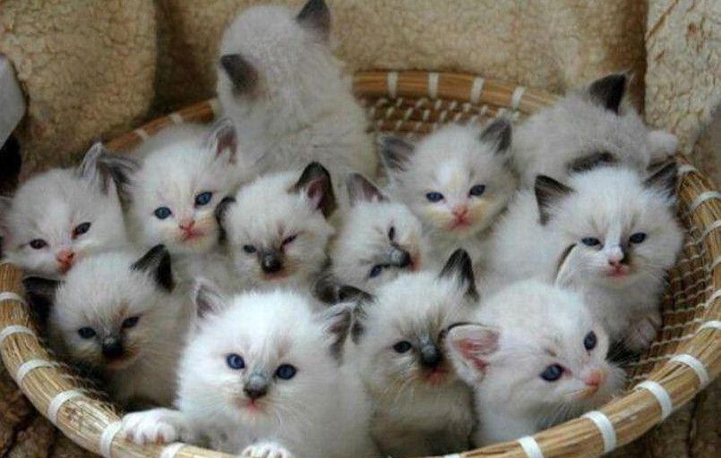 Cucciolo A Little Mini Kitten Adorabili Gattini Cuccioli
