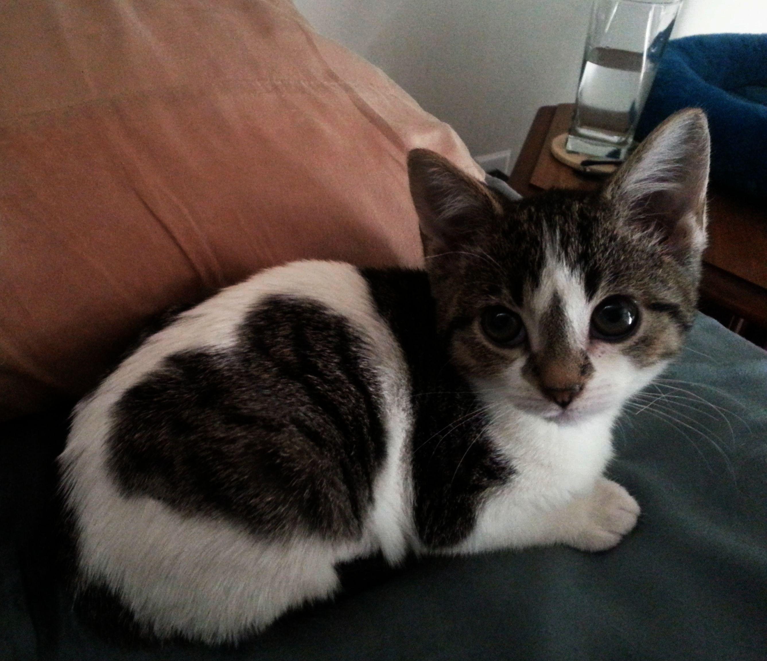 Adorable Kitten With A Heart Spot Cute Cats Kittens Cutest Cute Animals
