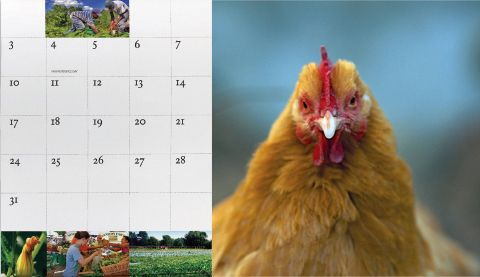 Agricultural Stewardship Association 2011 calendar sample - calendar sample design