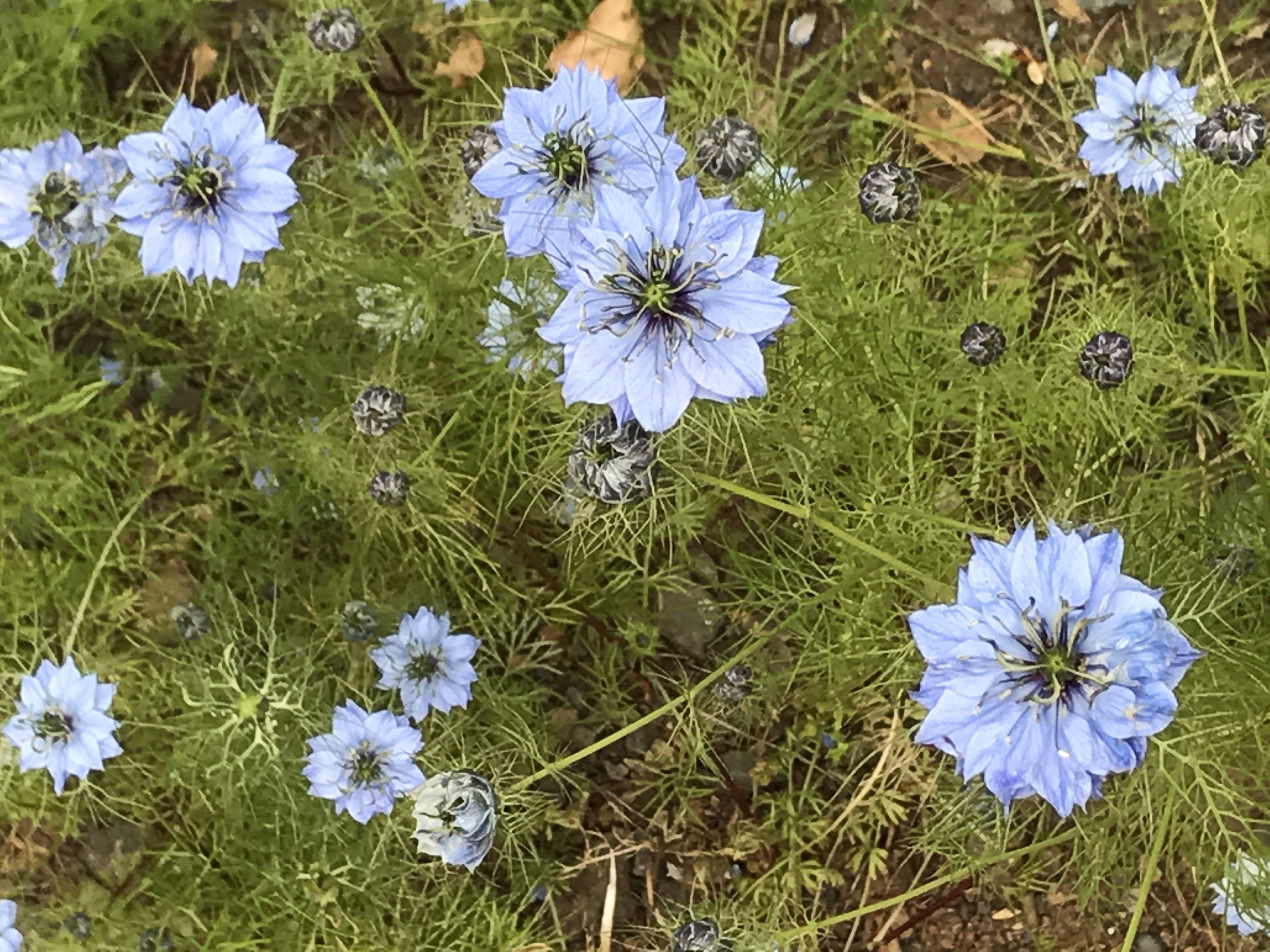 Pin by julie deguelle on portfolio class flowers plants
