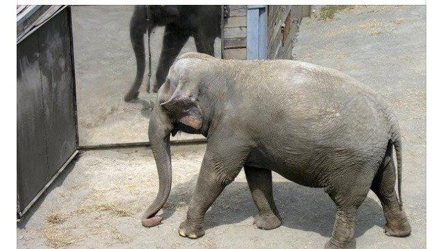 Petition · Happy the Elephant · Change.org