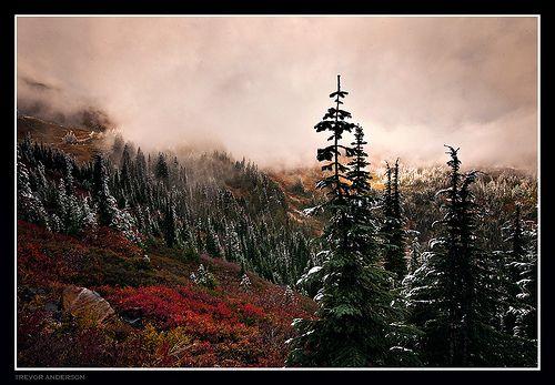 Merger of Seasons- Mt. Rainier