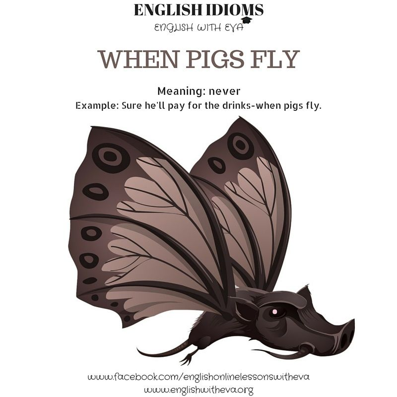 English Learning English Vocabulary English Idioms When Pigs Fly