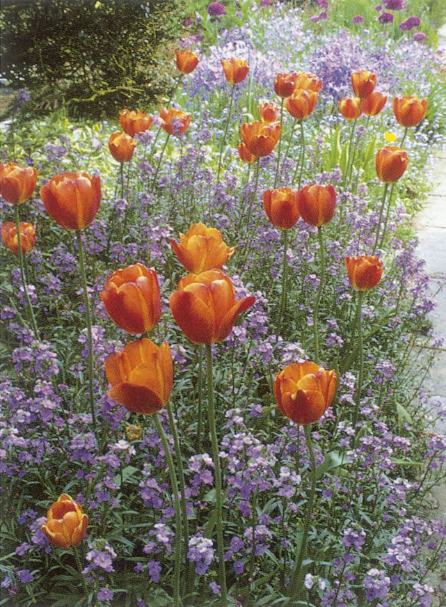 Favourite Flower from Alan Titchmarshs How to Garden modulus ii