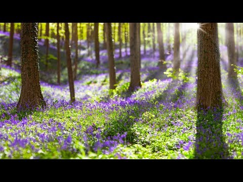 Peaceful Relaxing Instrumental Music Calm Meditation Music Bridges Of Light By Tim Janis Youtube Musica Classica Musica