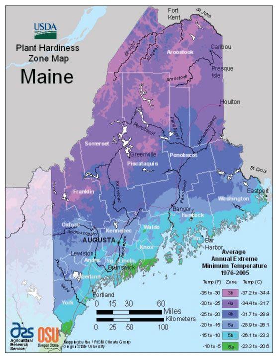 maine zone hardiness map garden pinterest planting plants and gardens