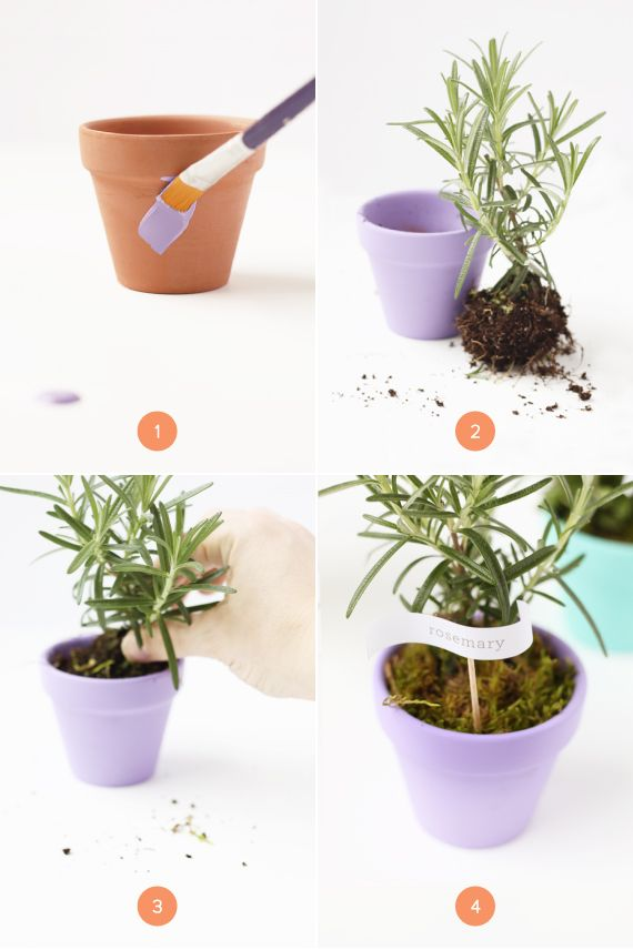 Mini Herb Pots For Mothers Day