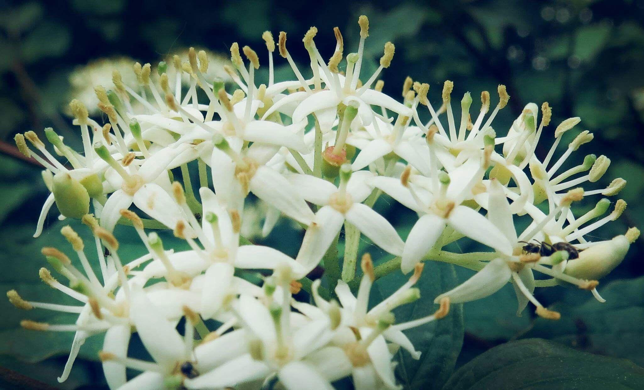 #flowers #photography #pyaar #emofofashion #emofopatsii #barunsobti