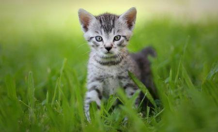 Cat - Cats Wallpaper ID 1785865 - Desktop Nexus Animals