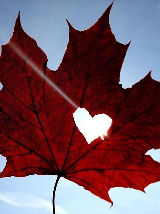 Pin By Genevieve On Hearts Forever Canada Day Canada Heart In