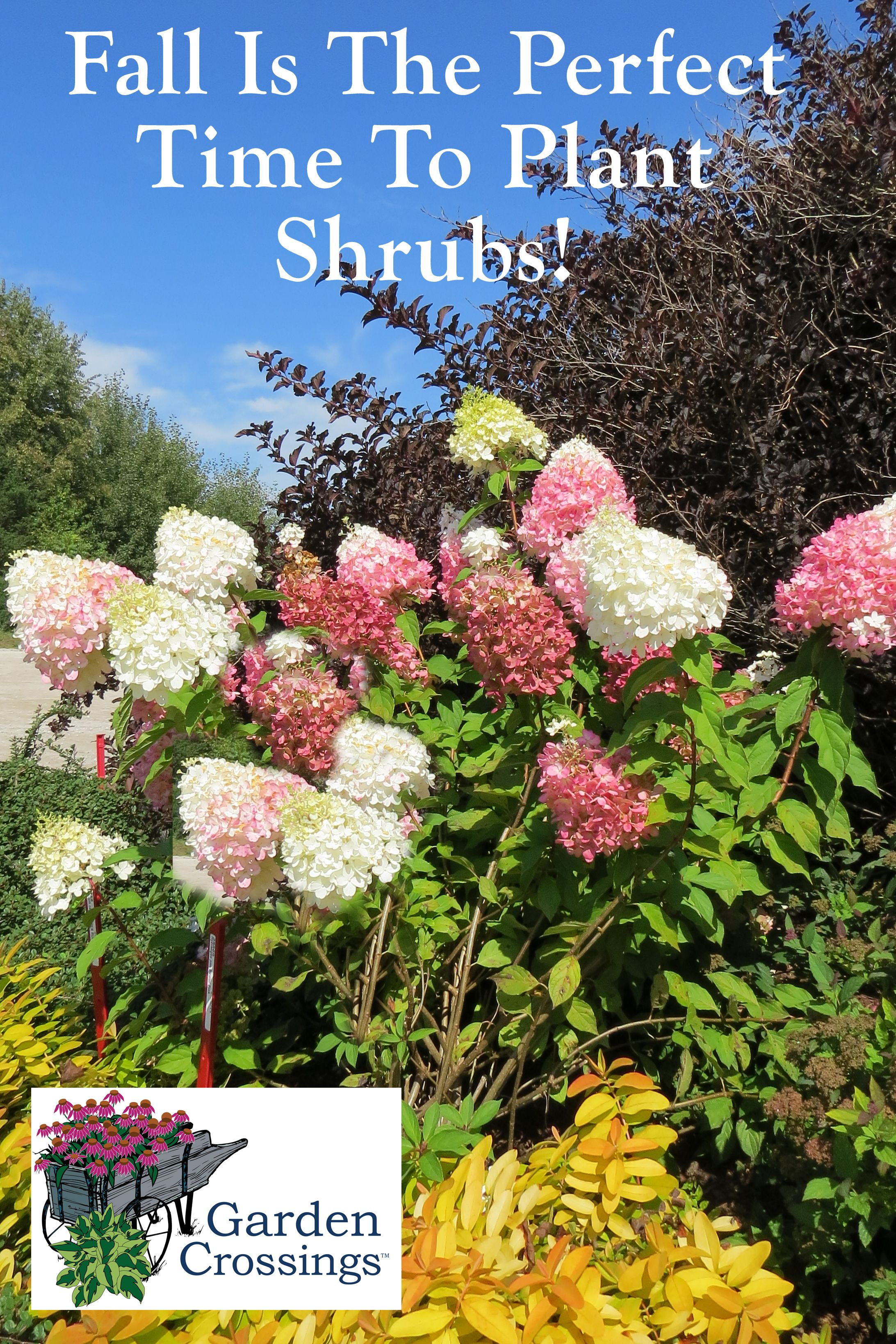 Fall Is The Perfect Time To Plant Shrubs Trees 400 x 300