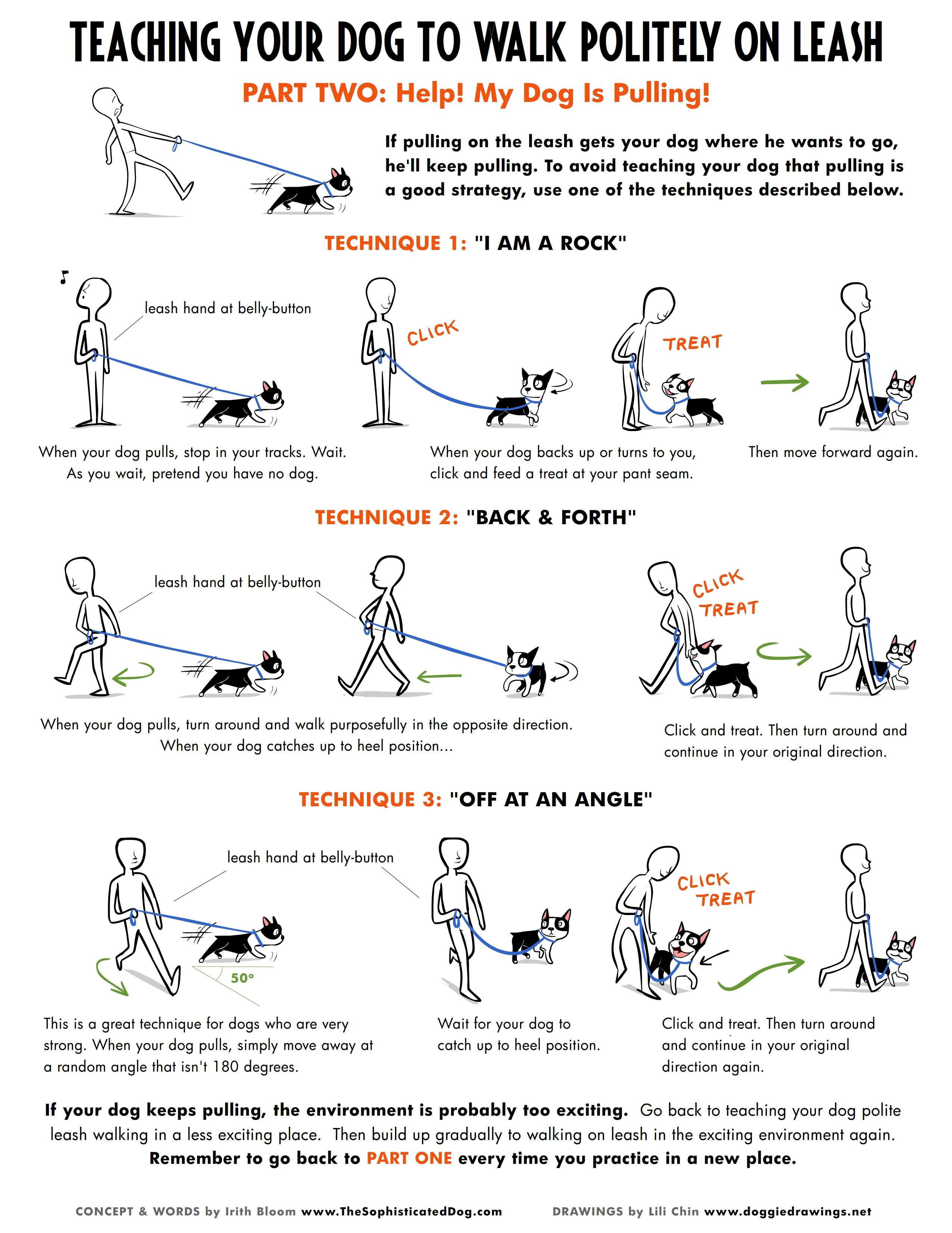 How To Train Your Dog That Loves To Pull How To Behave Themselves