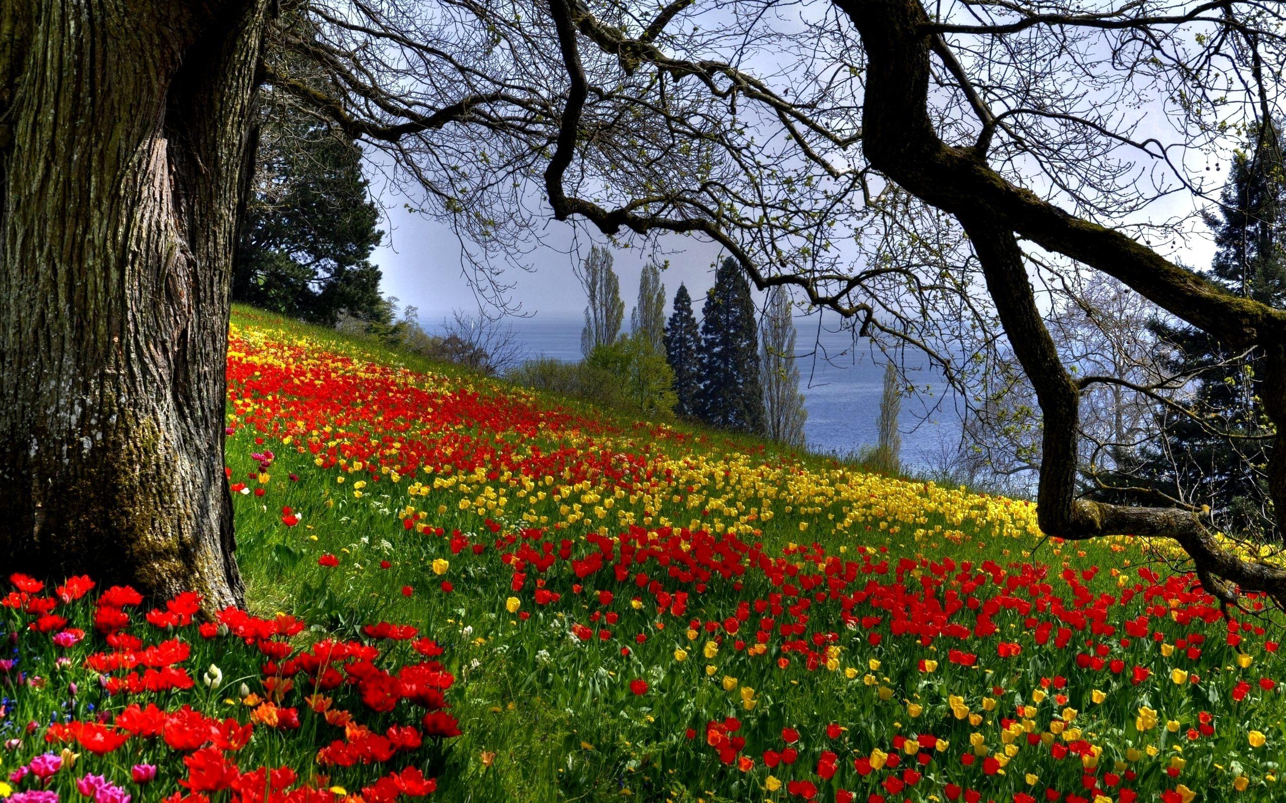 Colourful Flowers In Garden Beautiful Spring Colorful Field Flower Garden Plants Sea Slope Beautiful Forest Forest Flowers Spring Wallpaper