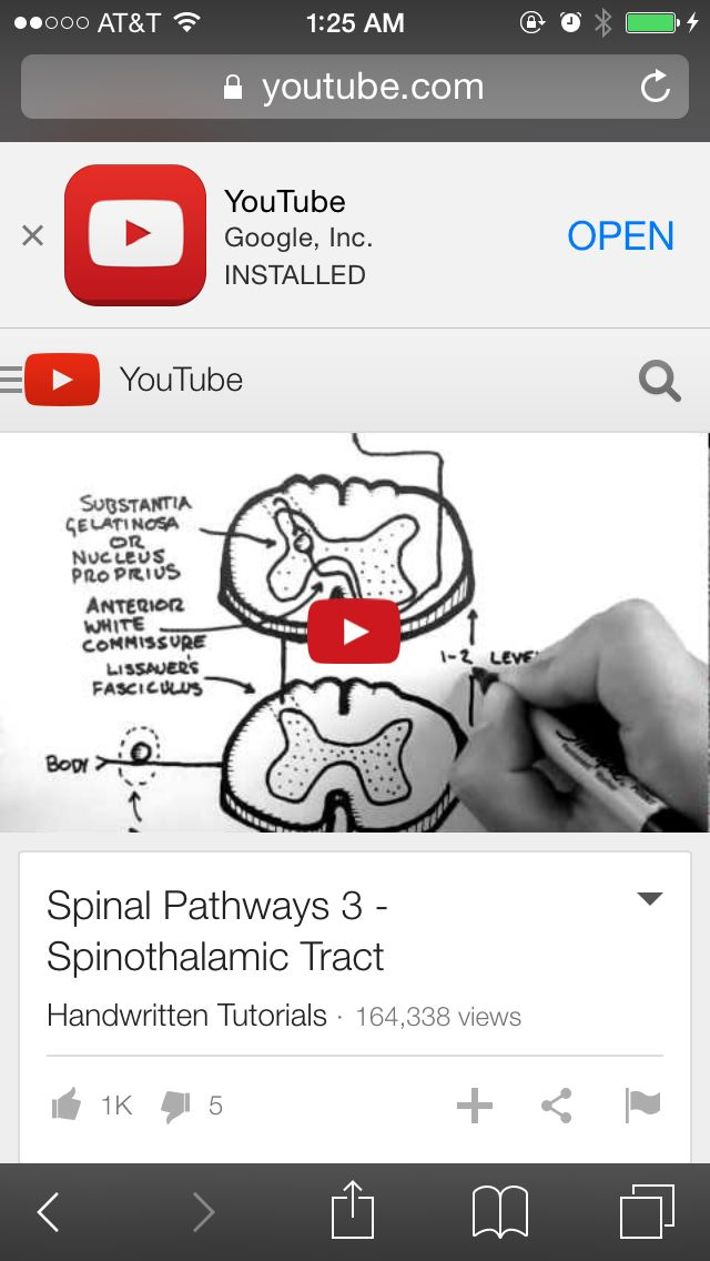 Spinothalamic Tract | Anatomy | Pinterest