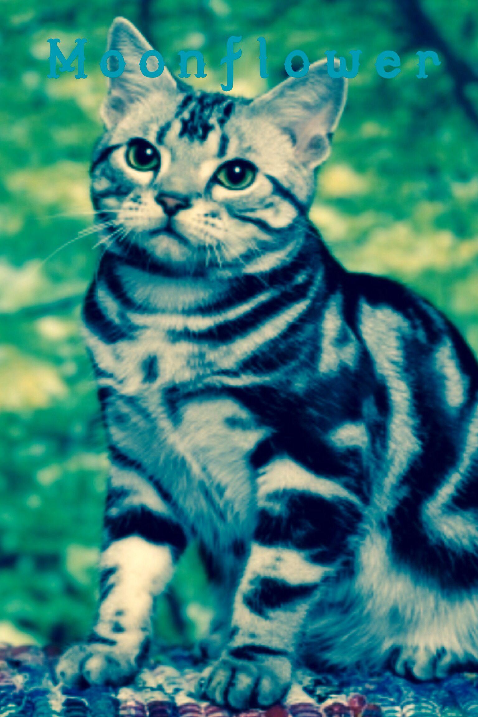 Moonflower Warrior cats, Feline, Cats