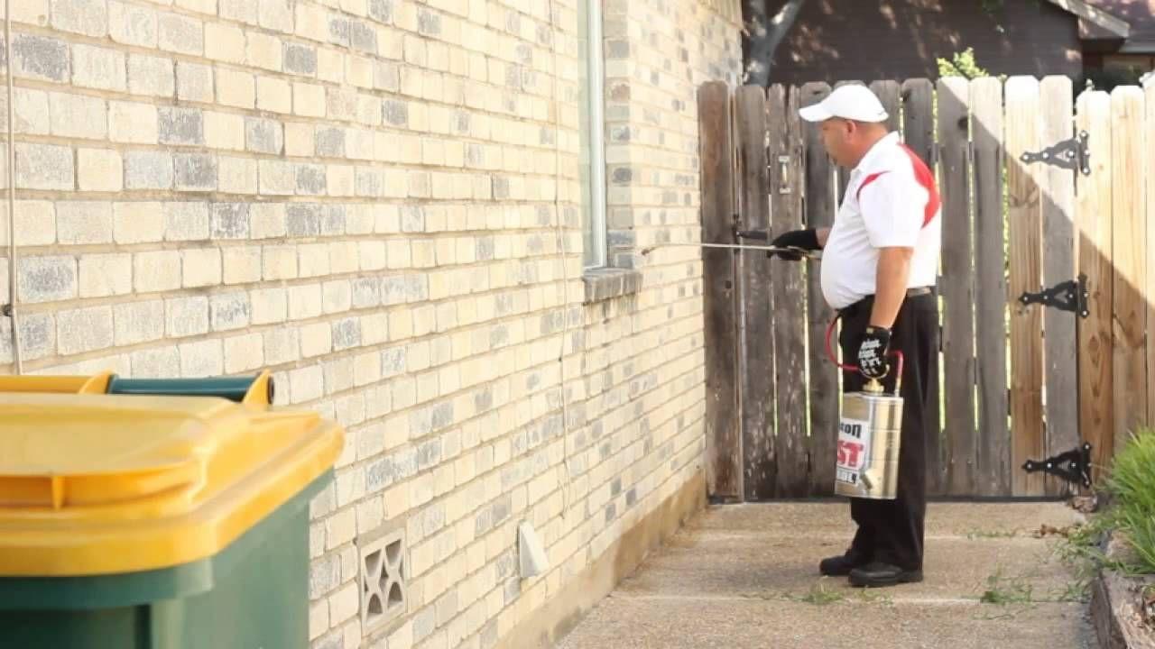 Most Preferred Pest Control Company in San Antonio Texas