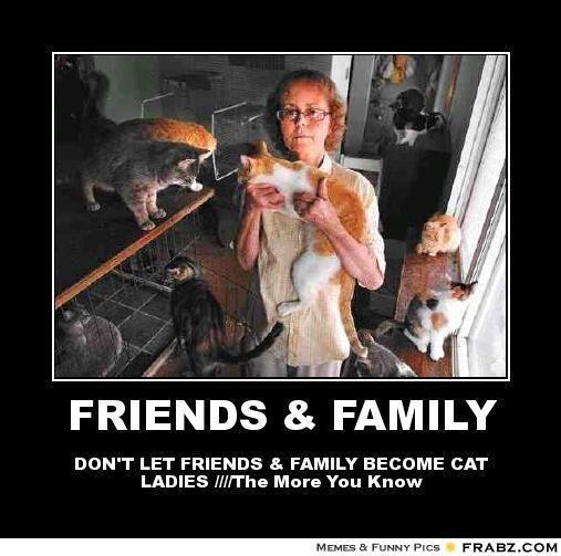 Funny Cat Lady Meme : Crazy cat lady meme google search ladies