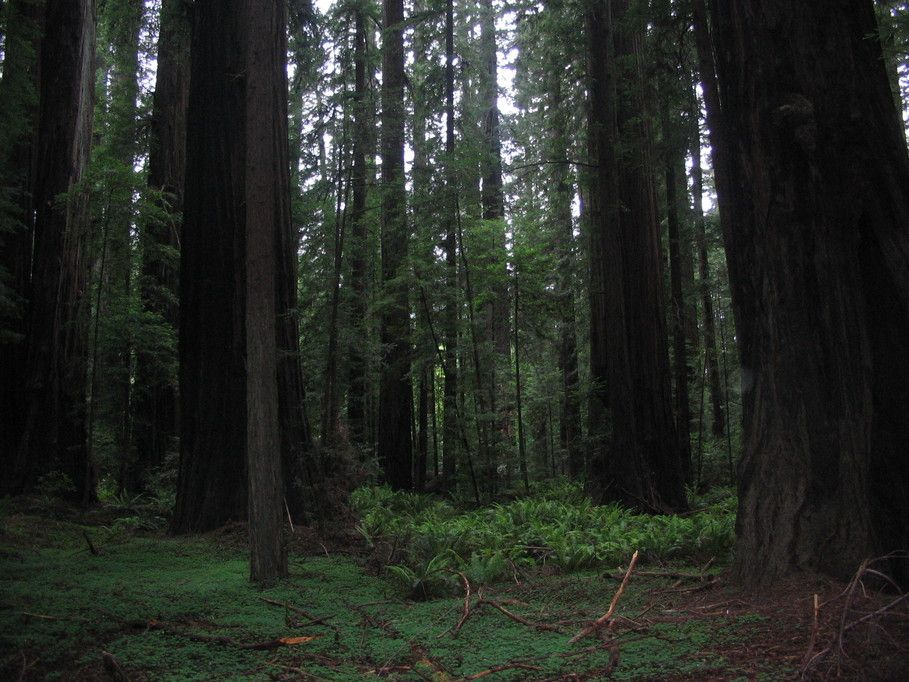 northern valley indian health woodland ca