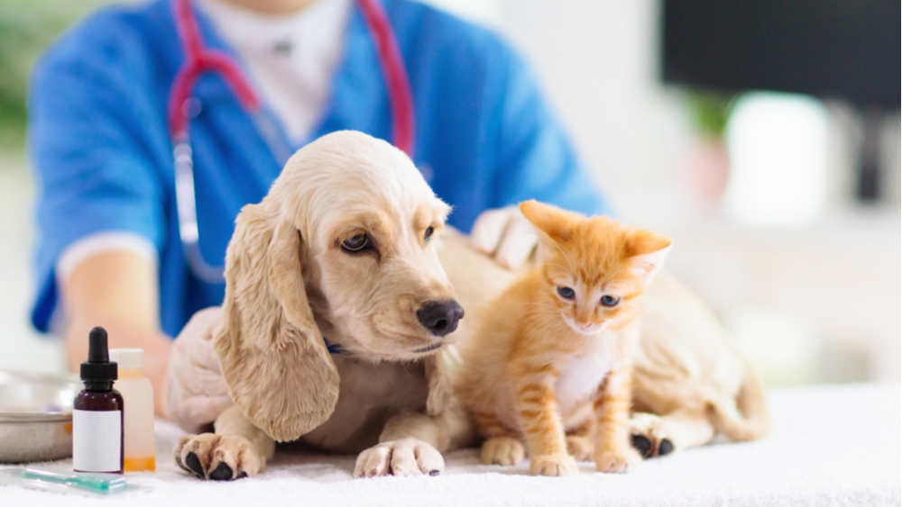 Pin On Pets Clinic