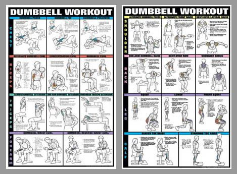 photograph regarding Dumbbell Workout Chart Printable known as Dumbbell Work out 2-Poster Knowledgeable Health and fitness Wall Chart