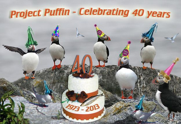 Project Puffin. Celebrating 40 years! Yay! please go to projectpuffin.org to learn more about these beautiful birds.
